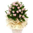 연핑크 장미꽃