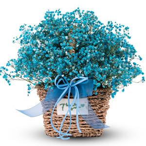 블루 안개꽃