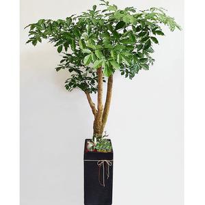 행복나무-고급가지