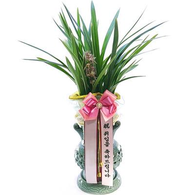 황용관-인기상품(꽃대)
